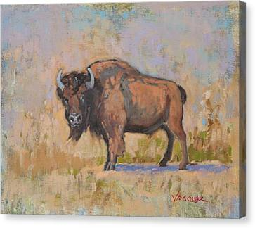 American Bison Canvas Print by Sal Vasquez