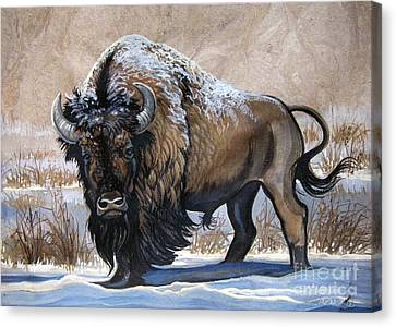 American Bison Winter Canvas Print by Anne Shoemaker-Magdaleno