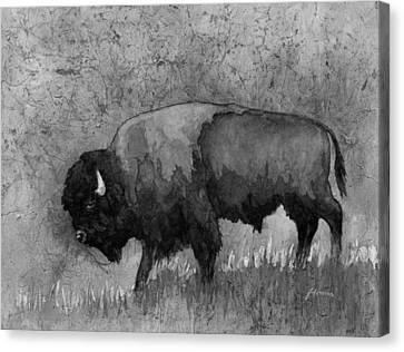 Bison Canvas Print - Monochrome American Buffalo 3  by Hailey E Herrera