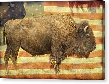 Bison Canvas Print - American Buffalo by James BO  Insogna