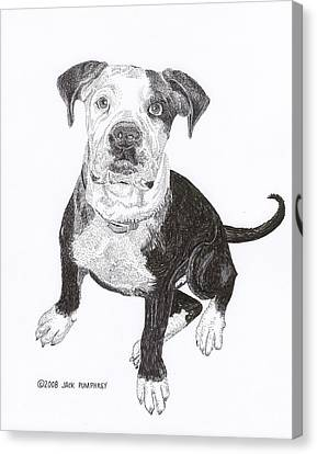 American Bull Dog As A Pup Canvas Print by Jack Pumphrey