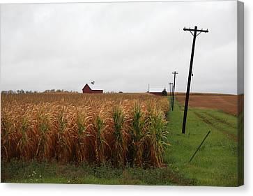 American Cornfield And Farmhouse Canvas Print