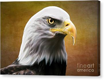 American Eagle Canvas Print by Shannon Rogers