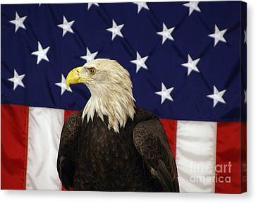 American Eagle And Flag Canvas Print