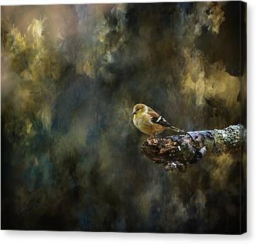 American Goldfinch 4 Canvas Print by Deena Stoddard