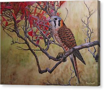 Fall In New England Canvas Print - American Kestrel Female by Ken Everett