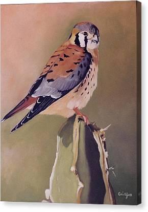 American Kestrel Canvas Print by Jean Yves Crispo