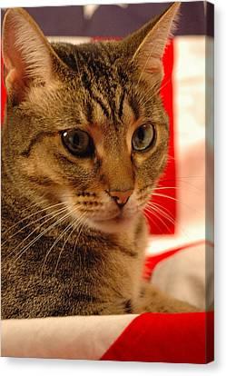 American Kitty 2 Canvas Print by Gary Marx