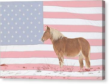 American Palomino Canvas Print by James BO  Insogna