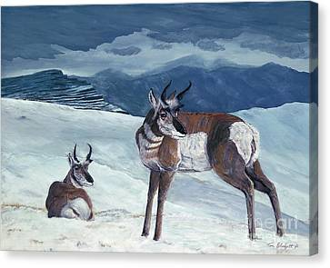 American Pronghorn Canvas Print by Tom Blodgett Jr