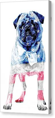 American Pug Phone Case Canvas Print by Edward Fielding