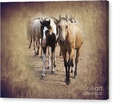 American Quarter Horse Herd Canvas Print by Betty LaRue