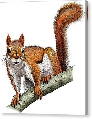 American Red Squirrel Canvas Print by Roger Hall