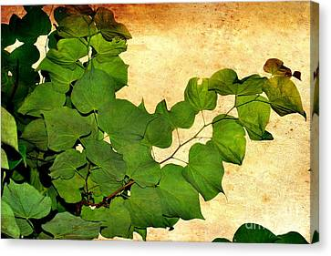 Canvas Print featuring the photograph American Redbud by Denise Tomasura
