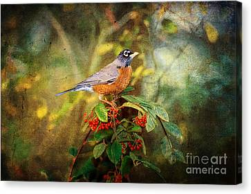 American Robin - Harbinger Of Spring Canvas Print by Lianne Schneider