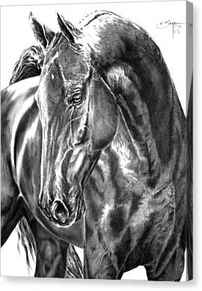 American Saddlebred Horse Canvas Print