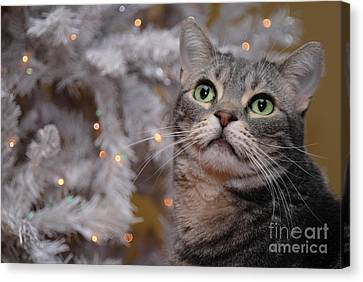 American Shorthair Cat With Holiday Tree Canvas Print