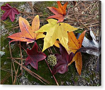 Autumn Canvas Print by William Tanneberger