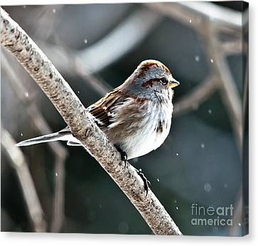 American Tree Sparrow Profile Canvas Print by Cheryl Baxter