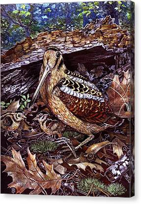 American Woodcock Canvas Print by Rick Reason