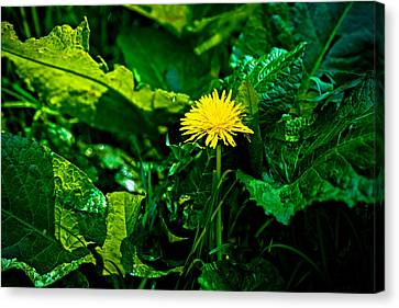 Amidst The Weeds Canvas Print