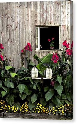Amish Canvas Print - Amish Barn by Diane Diederich