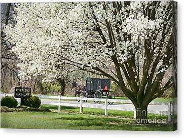 Amish Buggy Fowering Tree Canvas Print