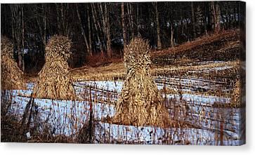 Amish Corn Shocks Canvas Print by R A W M