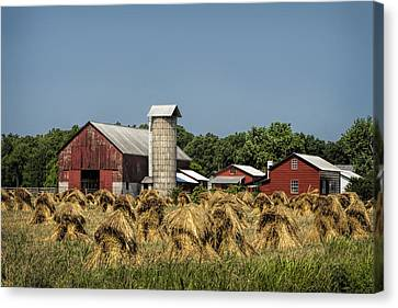 Amish Farm Wheat Stack Harvest Canvas Print by Kathy Clark