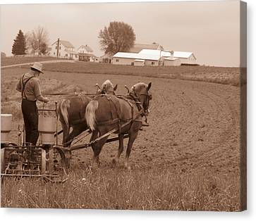 Amish Farmer Canvas Print by Janet Pugh