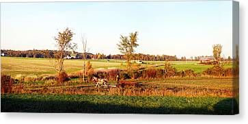 Amish Farmer Plowing A Field, Usa Canvas Print by Panoramic Images