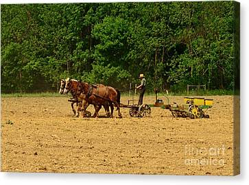 Plow Horse Canvas Print - Amish Farmer Tilling The Fields by Paul Ward