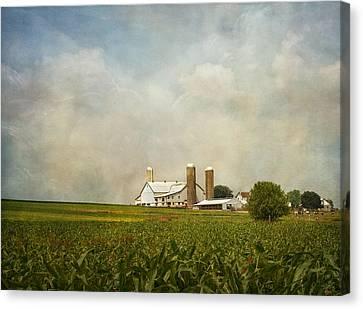 Amish Farms Canvas Print - Amish Farmland by Kim Hojnacki