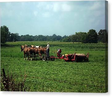 Amish Field Work Canvas Print