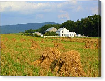 Amish Harvest #1 - Milroy Pa Canvas Print