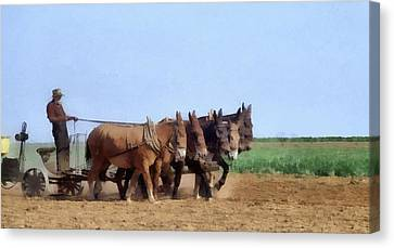 Amish Man Plowing The Fields Canvas Print by Dan Sproul