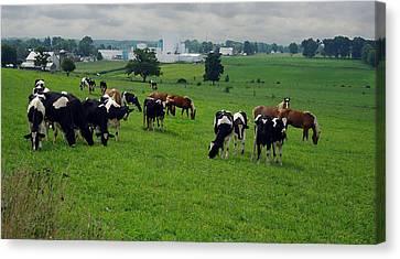 Amish Pastureland  Canvas Print by Joyce  Wasser
