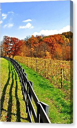 Grape Vines Canvas Print - Amish Vinyard by Frozen in Time Fine Art Photography