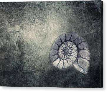 Ammonit  Canvas Print