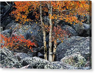 Wet Leaves Canvas Print - Among Boulders by Chad Dutson