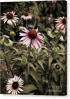 Among Friends Canvas Print by Frank J Casella