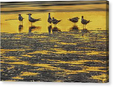Among Friends Canvas Print