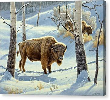 Among The Aspens- Buffalo Canvas Print by Paul Krapf