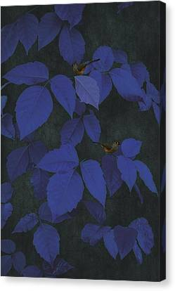 Among The Blue Leaves Canvas Print by Tom York Images