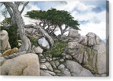 Among The Cypress Canvas Print