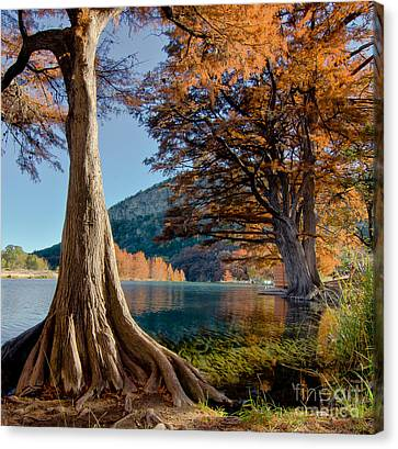 Among The Cypress Trees Canvas Print