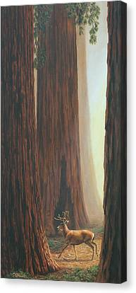 Sequoia Trees - Among The Giants Canvas Print by Crista Forest