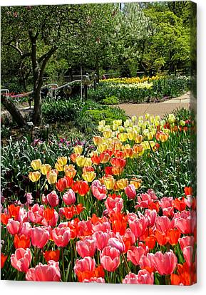 Canvas Print featuring the photograph Among Tulips by John Freidenberg