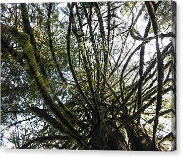Amongst The Branches Canvas Print by Lori Thompson