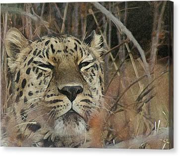 Amur Leopard 1 Canvas Print by Ernie Echols